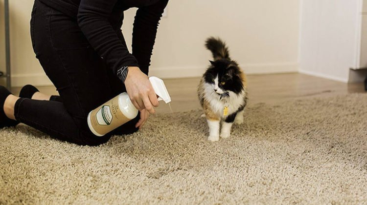 Top 7 Best Carpet Cleaner for Cat Urine Reviews 2019